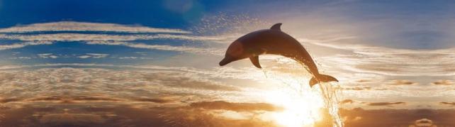 Подводный мир и животные_180