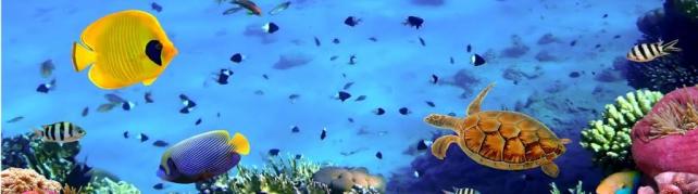 Подводный мир и животные_182