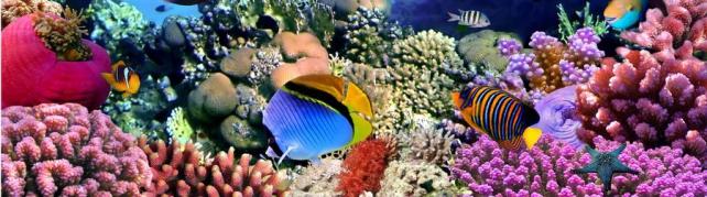 Подводный мир и животные_183