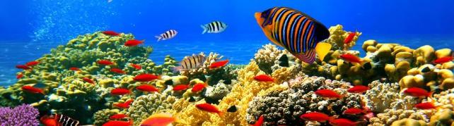 Подводный мир и животные_186