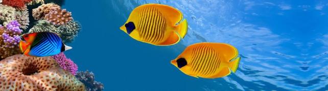 Подводный мир и животные_187