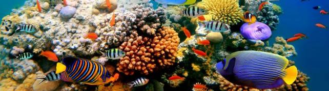 Подводный мир и животные_188