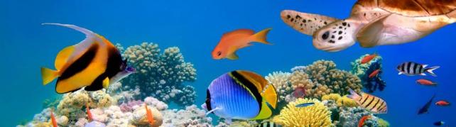 Подводный мир и животные_190