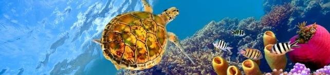 Подводный мир и животные_192