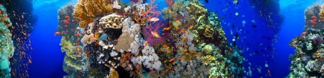 Подводный мир и животные_195