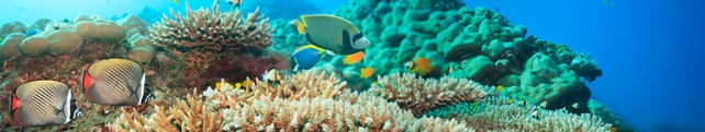 Подводный мир и животные_1