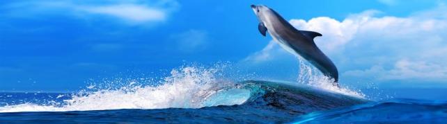 Подводный мир и животные_200