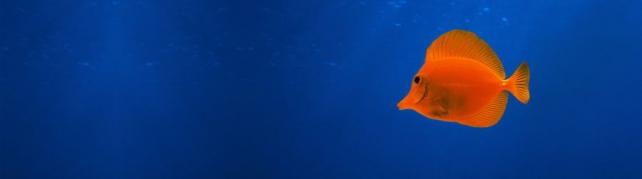 Подводный мир и животные_203