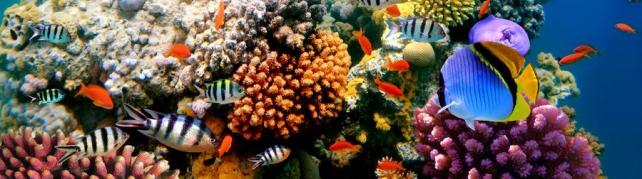 Подводный мир и животные_205