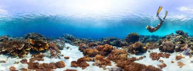 Подводный мир и животные_211