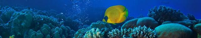 Подводный мир и животные_8