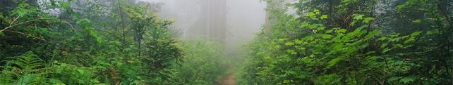 Природа_37