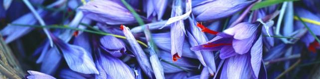 Цветы и растения_100