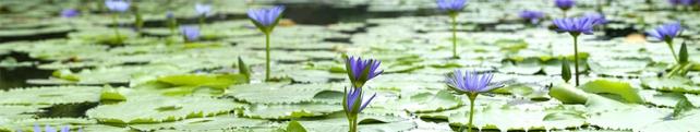 Цветы и растения_105