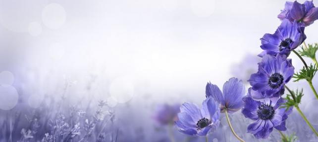 Цветы и растения_106