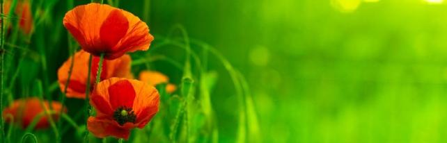Цветы и растения_109