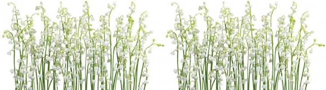 Цветы и растения_110