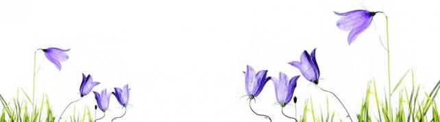 Цветы и растения_111
