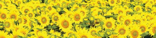 Цветы и растения_114