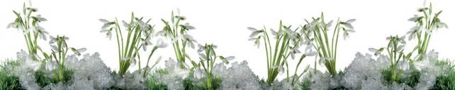 Цветы и растения_115