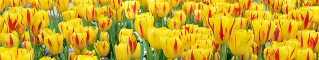 Цветы и растения_116