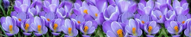 Цветы и растения_119