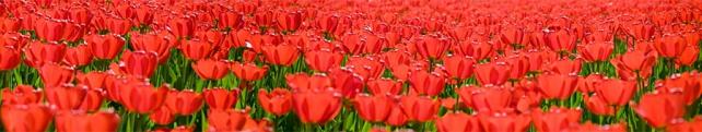 Цветы и растения_11