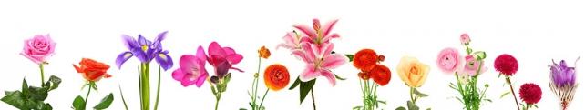 Цветы и растения_127