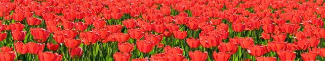 Цветы и растения_12