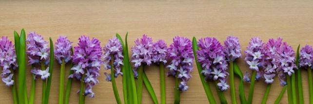 Цветы и растения_143