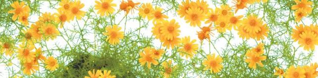 Цветы и растения_148