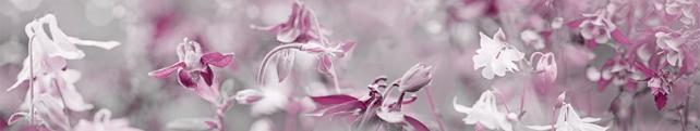 Цветы и растения_149