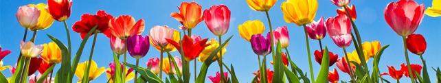 Цветы и растения_14