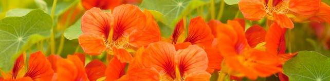 Цветы и растения_151
