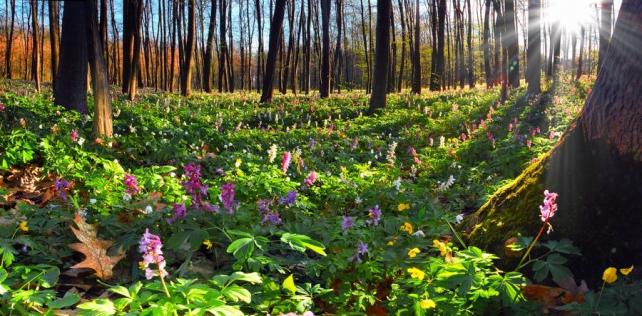 Цветы и растения_155