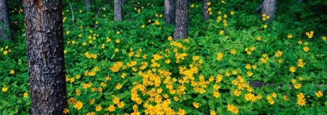 Цветы и растения_156