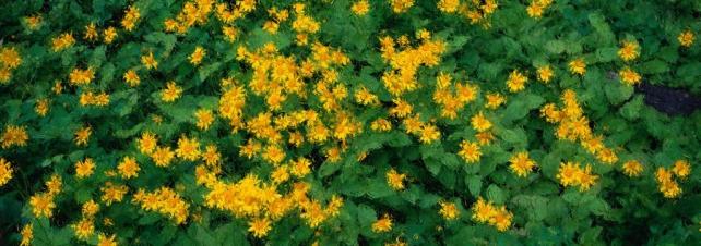 Цветы и растения_157