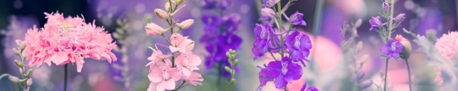 Цветы и растения_159