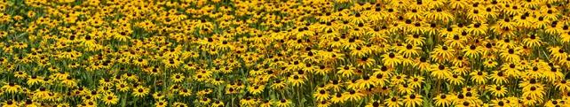 Цветы и растения_15