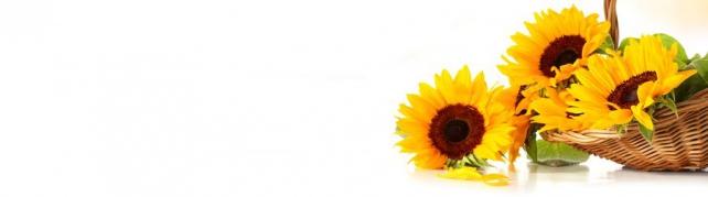Цветы и растения_167