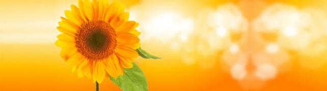 Цветы и растения_168