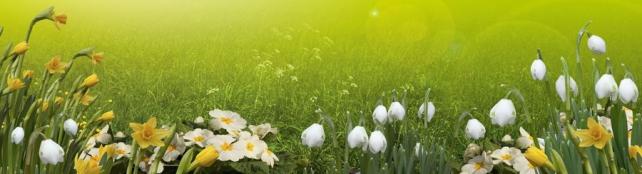 Цветы и растения_169