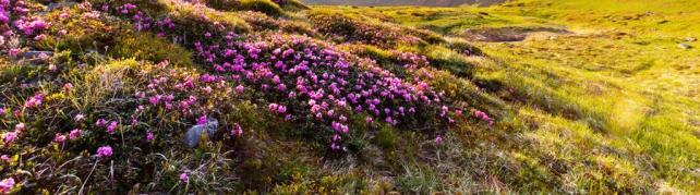 Цветы и растения_170