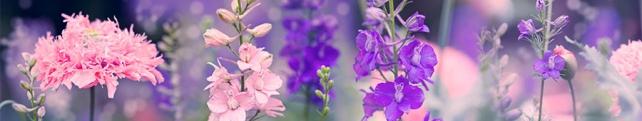 Цветы и растения_171