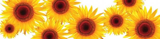 Цветы и растения_177