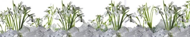 Цветы и растения_180