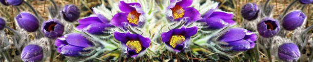Цветы и растения_181