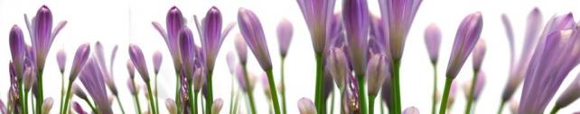 Цветы и растения_184