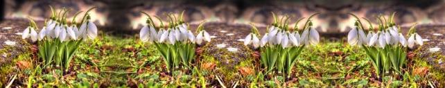 Цветы и растения_189