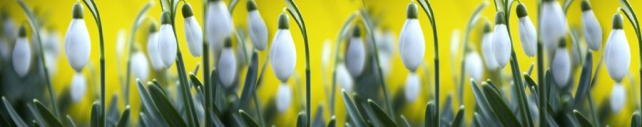 Цветы и растения_190